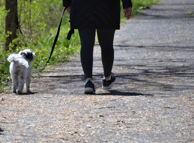 dog-walking-tips-for-first-time-dogowners