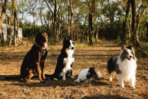 gps-dog-tracker-for-$20-50-as-electronic-gift